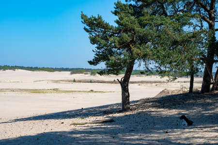 Desert nature landscapes in national park De Loonse en Drunense Duinen, North Brabant, Netherlands in sunny day Imagens