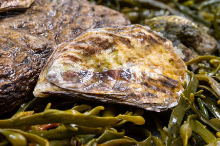 Fresh pacific or japanese oysters molluscs on stone with kelp seaweed background close up Banque d'images