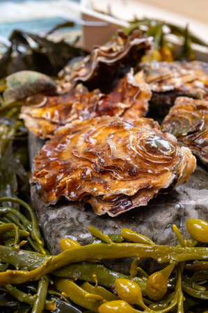 Fresh zeeuwse creuse pacific or japanese oysters molluscs on fish market in Yerseke, Netherlands Banque d'images