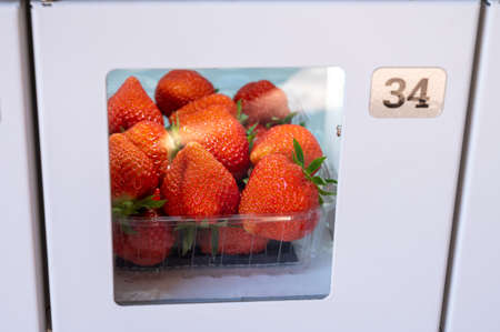Fresh ripe sweet pink lambada strawberry in plastic boxes for sale in automatic verding machine close up