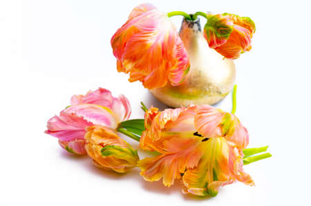 Colorful pink salmon parrot tulips in small vase on white background copy space floral concept