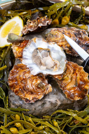 Fresh open zeeuwse creuse pacific or japanese oysters molluscs on fish market in Yerseke, Netherlands ready to eat
