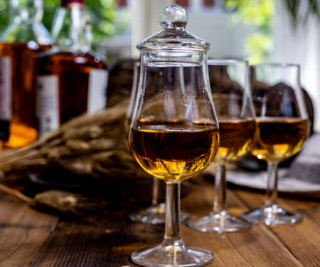 Tasting glasses with aged Scotch whisky or american bourbon on old dark wooden vintage table with barley grains