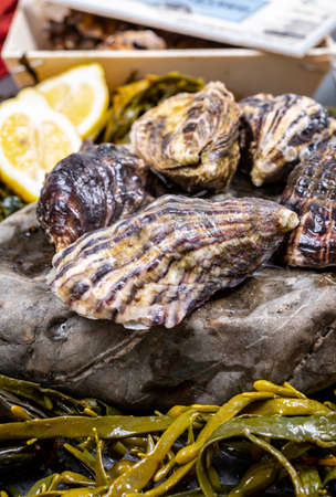 Fresh pacific or japanese oysters molluscs on stone with kelp seaweed background close up Imagens