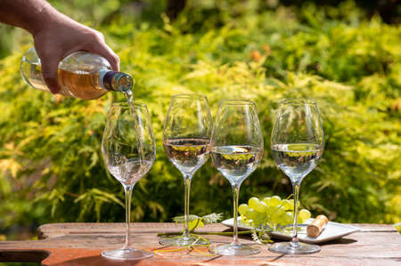 White and rose wine tasting on winery terrace, pouring of cold dry wine in glasses outdoor in sunny day