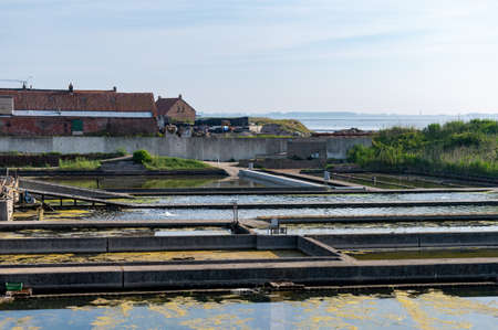 Zeeuwse village Yerseke with famous oysters wells for cultivation of Flat Belon and Creuse oysters and mussels, Zeeland, Netherlands