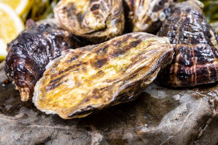 Fresh pacific or japanese oysters molluscs on stone with kelp seaweed background close up Stock Photo