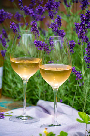 Love Provence, romantic picnic with two glasses of cold French rose wine and purple lavender flowers in sunny summer garden Banco de Imagens