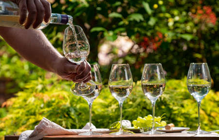 Pouring of Pinot gridgio rose wine for tasting in winery garden in Veneto, Italy. Glasses of cold dry wine served outdoor in sunny day