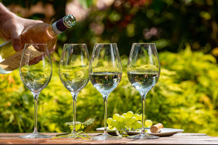White and rose wine tasting on winery terrace, pouring of cold dry wine in glasses outdoor in sunny day 写真素材 - 151109566