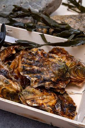 Fresh zeeuwse creuse pacific or japanese oysters molluscs on fish market in Yerseke, Netherlands Reklamní fotografie