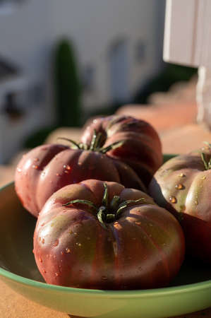 New harvest of big raddish-purple heirloom tomatoes Black Crimea close up