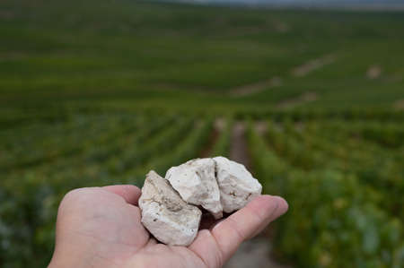 Hand with white chalk stones from soils of Cote des Blancs near Cramant, region Champagne, France and view on grand cru vineyards