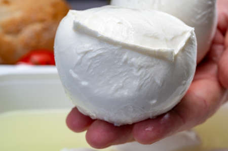 Cheese maker holding in hand fresh soft Italian cheese from Campania, white balls of buffalo mozzarella cheese made from cow milk in container with water close up