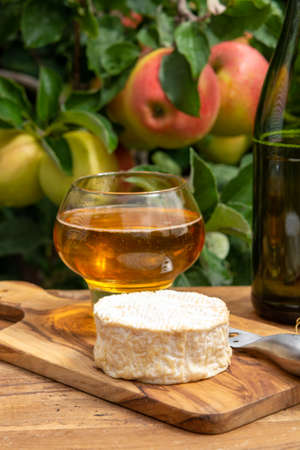 Taste of Normandy, France, glass of apple cider and camembert cheese served in orchard with green apple tree with ripe red fruits on background