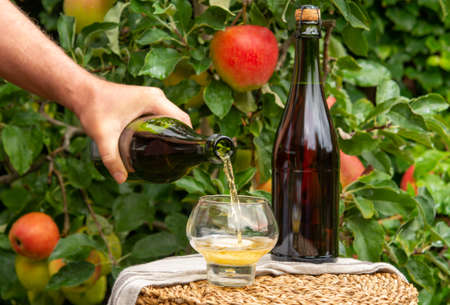 Pouring of brut apple cider from Normandy in glass, France and green apple tree with ripe red fruits on background