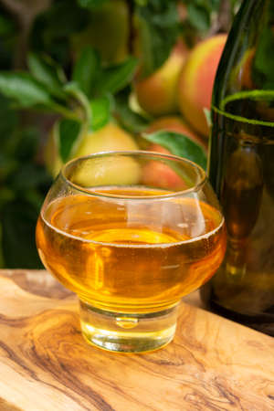 Glass of brut apple cider from Normandy served in garden in France and green apple tree with ripe red fruits on background