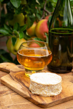 Taste of Normandy, France, glass of apple cider and camembert cheese served in orchard with green apple tree with ripe red fruits on background Archivio Fotografico