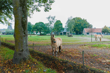 Rural Dutch landscape with green pasture, horses and farms in Brabant