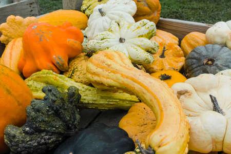 Autumn harvest of colorful pumpkin vegetables for sale on farm close up