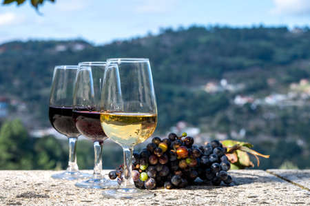 Outdoor tasting of different fortified port wines in glasses in sunny autumn, Douro river Valley, Portugal, close up
