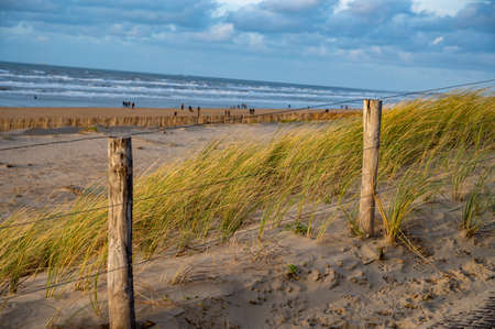 Green grass protects sandy dunes from wind on wide windy beach of North sea near Zandvoort in Netherlands in winter Stockfoto