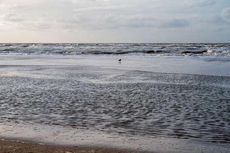 North sea waves in winter near Zandvoort in Netherlands Stockfoto