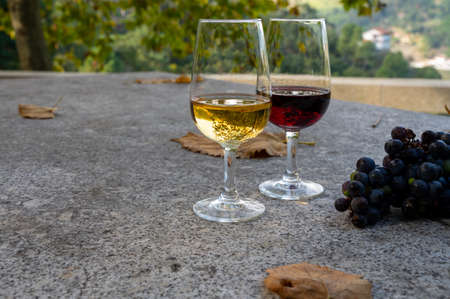 Outdoor tasting of different fortified vintage port wines in glasses in sunny autumn, Douro Valley, Portugal, close up
