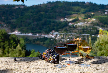 Outdoor tasting of different fortified ruby, tawny and white port wines in glasses in sunny autumn, Douro river Valley, Portugal, close up