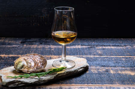 Food and drink pairing, Fresh raw European flat oysters grown in Brittany in Belon river, France, close up and scotch single malt whiskey from Islay island, Scotland
