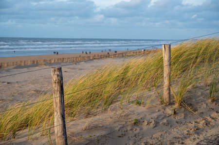 Green grass protects sandy dunes from wind on wide windy beach of North sea near Zandvoort in Netherlands in winter