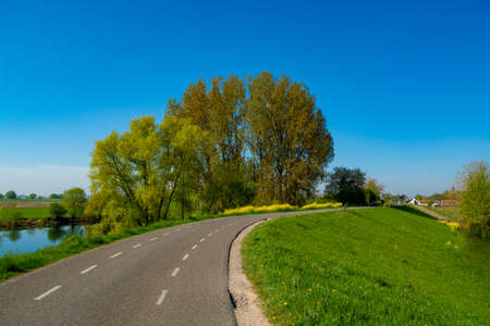 Spring nature landscape with yellow blossom of rapeseed plants in sunny day in Betuwe, Gelderland, Netherlands