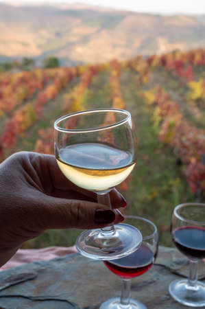 Tasting of Portuguese fortified dessert and dry port wines, produced in Douro Valley with colorful terraced vineyards on background in autumn, Portugal. Hand with glass.