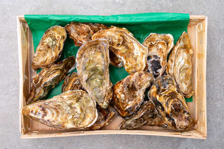 Eating of fresh big raw fine de claires vertes green french oysters from Marennes-Oleron, top view