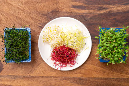 Healthy food, young sprouts plants or chives onion, coriander, red beet, alfalfa, seemed ready for consumption Foto de archivo