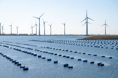 Netherlands, Bruinisse, Mussels farming in Oosterschelde or Grevelingen estuary. Background Grevelingen Dam, part of Delta works and windmills