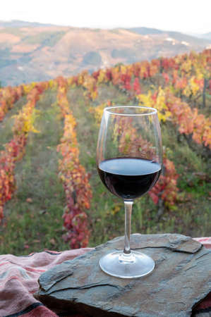 Glass of Portuguese red dry wine, produced in Douro Valley and colorful old terraced vineyards on background in autumn, wine region of Portugal