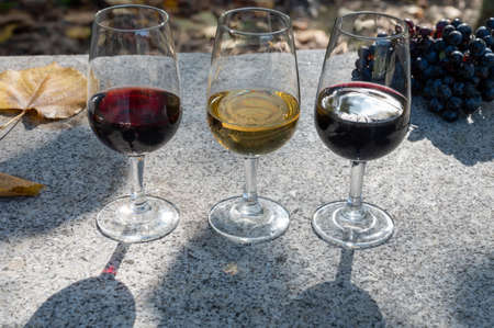 Tasting of Portuguese fortified dessert and dry port wine, produced in Douro Valley in autumn, Portugal