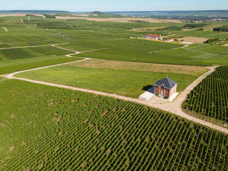 Aerial view on green vineyards in Champagne region near Epernay, France, white chardonnay wine grapes growing on chalk soils in summer