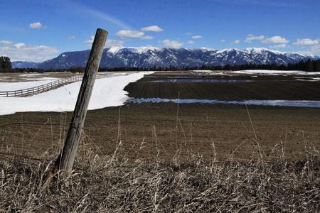 Fertile spring field