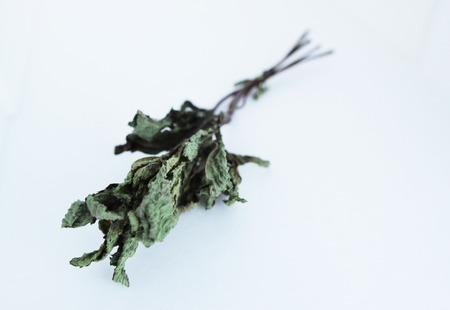 wicca: Dried herbs