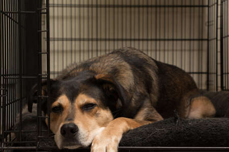 Lazy dog asleep in his crate.
