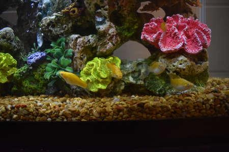 Fish tank in my Dorm Room Stock Photo