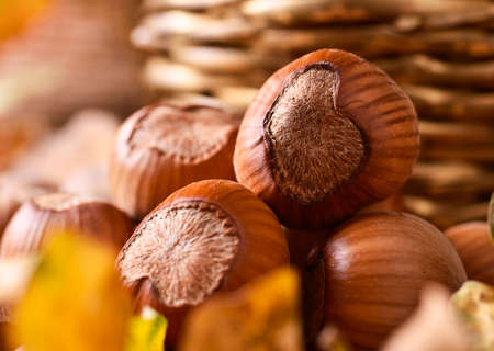 nutshells: Hazelnuts on autumn leaves