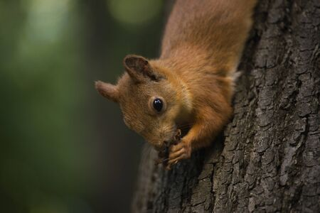 Squirrel on a branch in the forest. Фото со стока