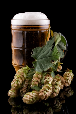 Glass of cold beer on a black background  Nearby lies hop Stock Photo - 16398927
