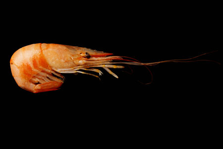 unpeeled: Cooked, unpeeled shrimp on a black background  Stock Photo