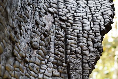 celulosa: �rbol, quemado, corteza, naturaleza, carb�n, negro, bosque, tronco, holl�n, plantas, agrietada, textura, da�ado, fondos, madera, �spero, macro, bosque, org�nico, tel�n de fondo, la violencia, marr�n, desnudo, la tenacidad, la celulosa, en colores pastel, la temporada, el envejecimiento, la fuerza, barkless, muscular, Foto de archivo