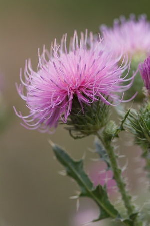 Photo of purple flower spikes.
