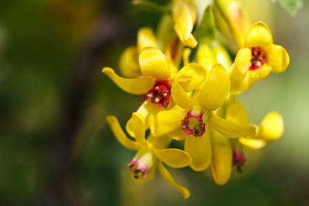Photo of the beautiful yellow flower. Stock Photo